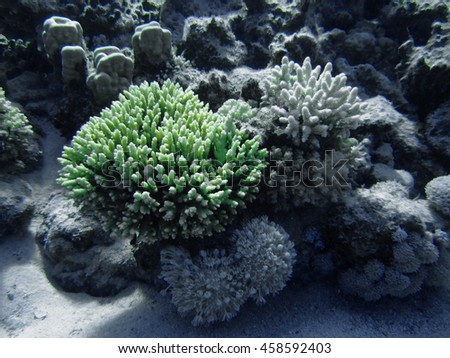The coral reef on the sand bottom. Underwater paradise for scuba diving, freediving. Red sea, Dahab, Egypt. - Shutterstock ID 458592403