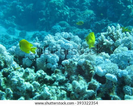 The coral reef. Underwater paradise for scuba diving, freediving. Red sea, Dahab, Egypt. - Shutterstock ID 393322354