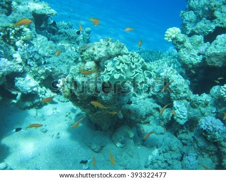 The coral reef. Underwater paradise for scuba diving, freediving. Red sea, Dahab, Egypt. - Shutterstock ID 393322477