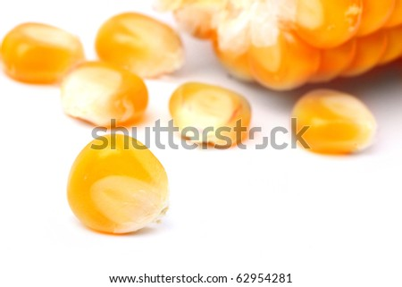 The corn on a white background. Close up with shallow DOF.