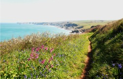 The Cornish Coastal path from Port Issac to Tintagel. Showing spring flowers bluebells, pink campion and blackthorn with sea/coastal views to Tintagel in the far distance