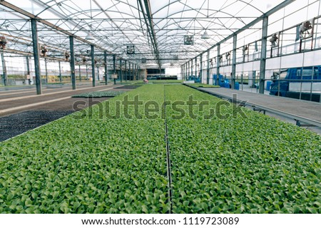The Countryside of Taiwan: Vegetable Greenhouse #1119723089
