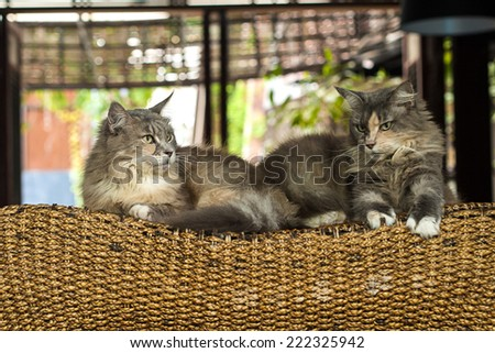 The couple cat laying on the wood bed