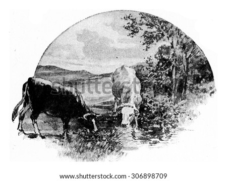 the cow eats grass and clover...