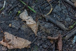 The crane fly on the ground like background. High quality photo
