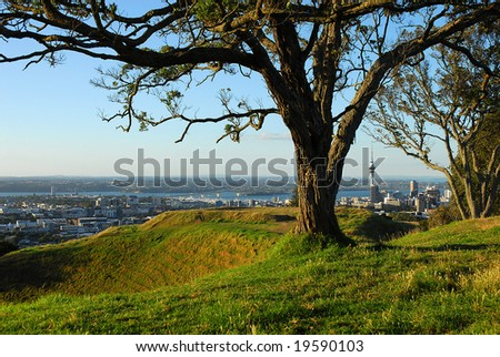 The crater of Auckland's Mount Eden volcano to left of shot, framed by a tree with the city skyline in the distance