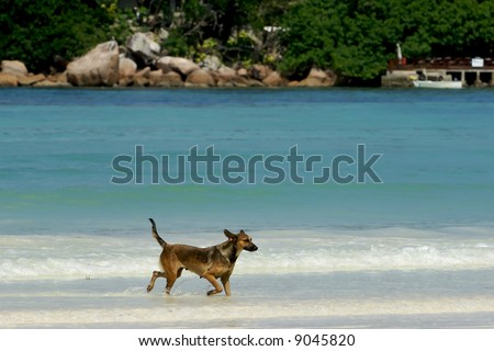 The creole dog walks on water