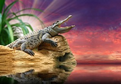 The Crocodile against sunset sky over a tropical sea.