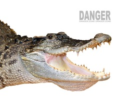 The Crocodile head with opened jaws.