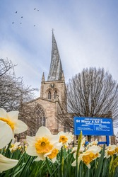 The Crooked Spire Church of St Marys and all saint Chesterfield market town Derbyshire spring summer day with famous twisted ancient parish steeple  behind beautiful yellow flowers daffodils