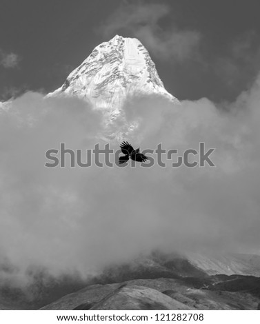 The crow flies on the background Ama Dablam (6814 m) - Everest region, Nepal, Himalayas (black and white)