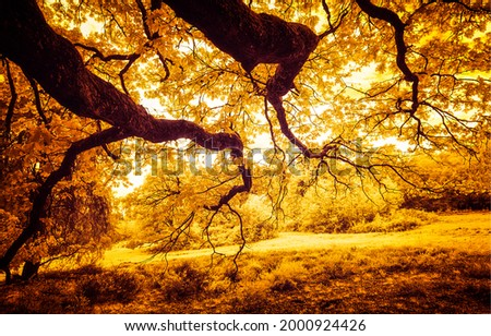 The crowns of autumn trees in the sunlight. Autumn tree branches. Autumn background