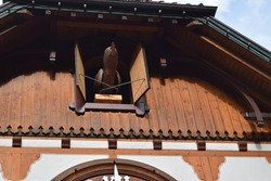 the cuckoo of the world's largest cuckoo clock calls cuckoo on the hour in Triberg, black forest, Germany