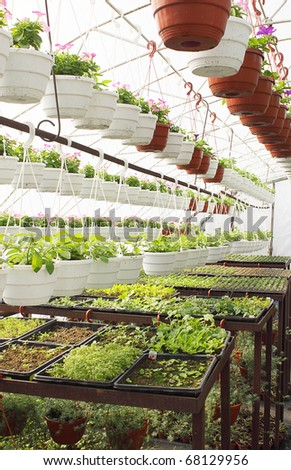the cultivation of seedlings in the greenhouse