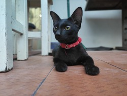 the cute and lovely wild blackcat