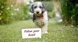 The cute black and white adopted stray dog on a green grass , focus on a head of dog. card with text follow your heart