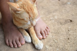 The cute brown cat looks drowsy, lying on the dry ground and between the feet of the girl