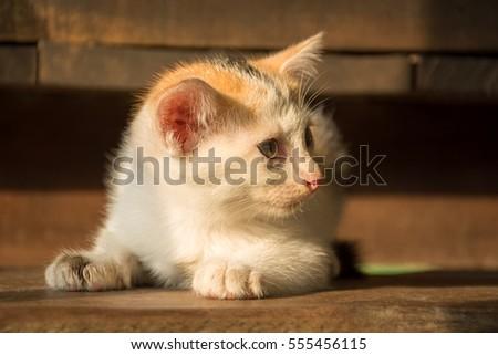 the cute cat in morning,cute cat alone , cat sad,Kitten #555456115