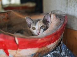 The cute cat is sitting on the charcoal stove, Thailand.