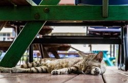 The cute cat sleeping under the green wooden table. Street cat. Selective focus.