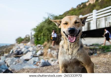 The cute smile dog close eye