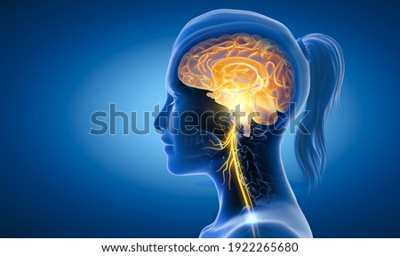 The 3D illustration showing brain and active vagus nerve (tenth cranial nerve or CN X)