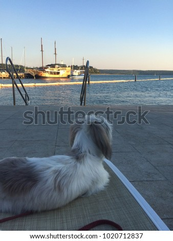 The dag by the sea . Summer background. Sea background with the dag