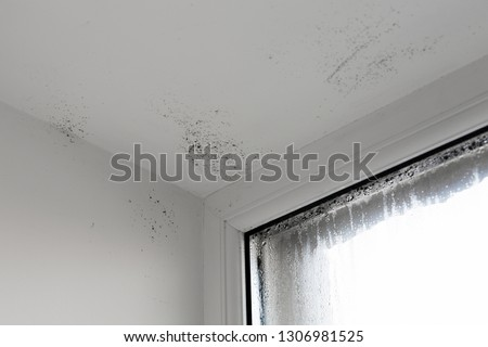 The damp is attacking the wall. mold on window. House Window With Damp And Condensation.