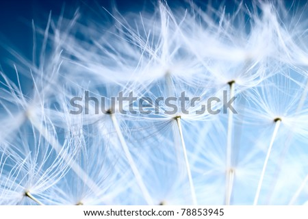 The Dandelion background.Abstract dandelion seeds over blue sky - stock photo