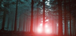 the dark forest background of nature. UFO light in backround