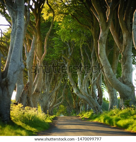 The Dark Hedges, an avenue of beech trees along Bregagh Road in County Antrim. Atmospheric tree tunnel has been used as filming location in popular tv series. Tourist attractions in Nothern Ireland. #1470099797