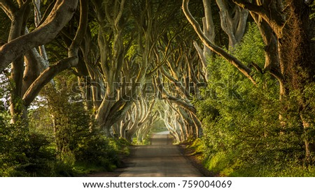 The Dark Hedges Northern Ireland #759004069