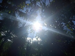The dazzling sun under the trees shinning brightly on us.