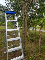 The decoration of tall tree branches requires a sturdy staircase danger do not stand on or above this rung you can lose your balance
