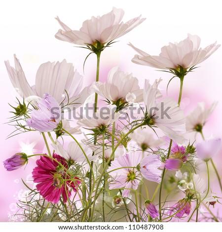 The decorative flowers.Flora - stock photo