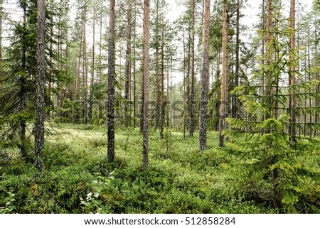 stock-photo-the-deep-forest-of-finland-5