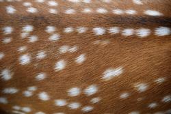 The deer fur
