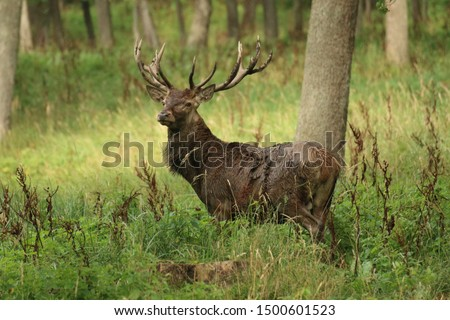the deer in the rut #1500601523