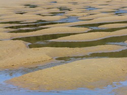 The delta of a creek emptying into Smuggler Cove on the Oregon coast creates tide pools on Short Sand Beach