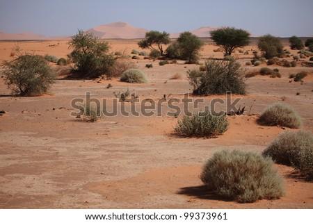 The Desert Sahara