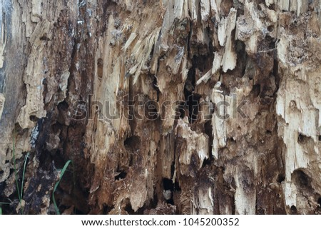 the destroyed rotten old tree on the background of sprouted grass. Texture #1045200352