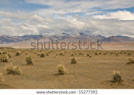 The Devil's Cornfield below the mountains and dramatic sky in Death Valley National Park, California.