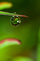 The dew on the grass becomes a very interesting photo object if you take it with a macro lens