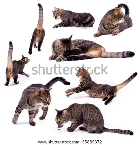The different cat on the white isolated background