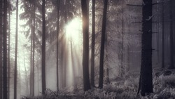 The diffused light penetrates the fog in the winter frosty forest. Czech Republic, Beskydy mountains.