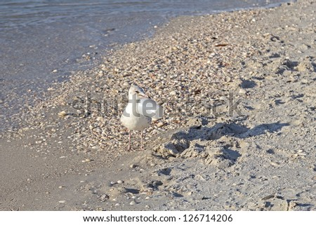 The diligent seagull is cleaning the beach from trash - stock photo
