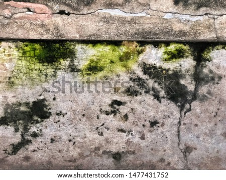 The dirty dark cement or concrete floor with fungus, fungi and bacteria, wet and moisture rough area on surface can spread and inflection some disease, use as a grunge vintage background style.