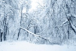 The disaster heavy snowfall broken-down the large trees