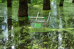 the discarded shopping cart is visible from the forest lake. environmental pollution.