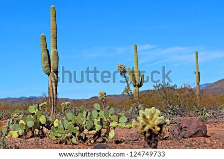 The diversity of the Arizona desert landscape - stock photo